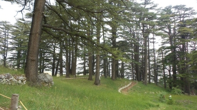 CEDARS OF GOD, BCHARRE